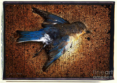 Photograph - Blue Bird Blue by Craig J Satterlee