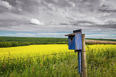 Photograph - Blue Bird House With Canola Field View by Darcy Michaelchuk