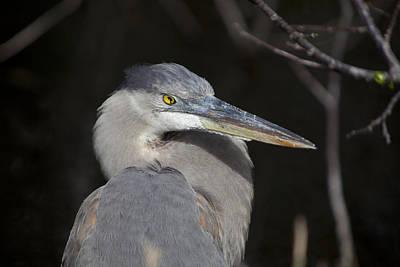 Aviary Photograph - Blue Bird by Jon Glaser