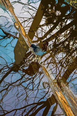 Photograph - Blue Bird by Josy Cue