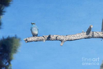 Photograph - Blue Bird On Limb by Dan Friend