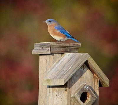 Egret Mixed Media - Blue Bird by Robert Pearson