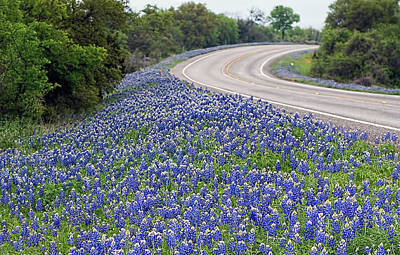 Photograph - Blue Bonnets. Along The Highway by Brian Kinney