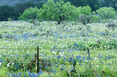 Photograph - Blue Bonnets,poppies And Willow Tree 2 by Usha Peddamatham
