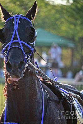 Photograph - Blue Bridle by Susan Herber