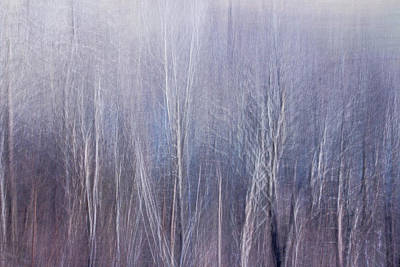 Photograph - Blue Brush by Davin McLaird