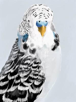 Parakeet Wall Art - Digital Art - Blue Budgie by KC Gillies