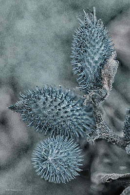 Photograph - Blue Burrs by WB Johnston