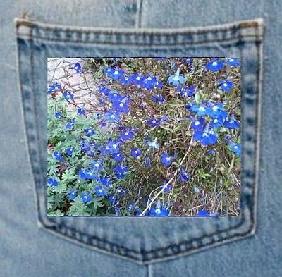 Pocket Photograph - Blue Bush Flower Pocket by Julia Woodman