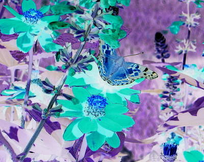 Photograph - Blue Butterfly And Teal Flowers by Karen J Shine