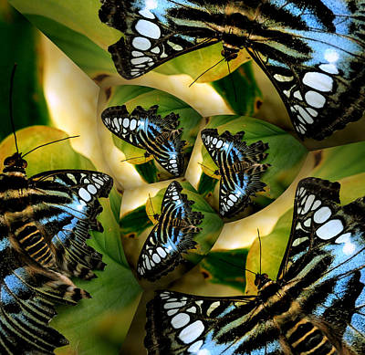Blue Butterfly Collage Art Print by Irma BACKELANT GALLERIES