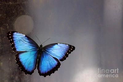 Photograph - Blue Butterfly Dreams by Karen Adams