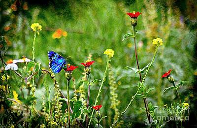 Blue Butterfly In Meadow Art Print by John  Kolenberg