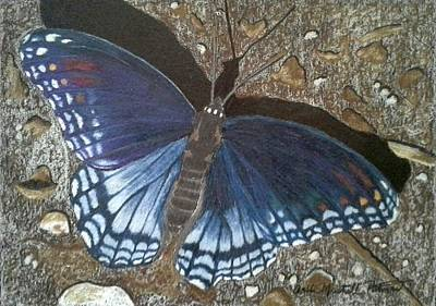 Drawing - Blue Butterfly - Savannah Charaxes by Anita Putman