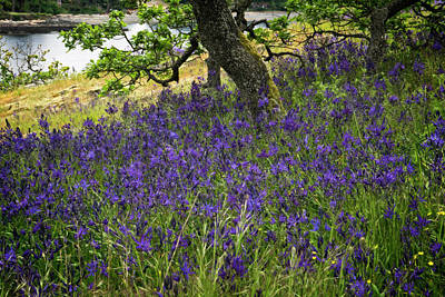 Photograph - Blue Camas And Garry Oak by Inge Riis McDonald
