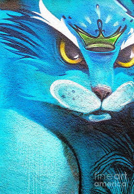 Photograph - Blue Cat by Ethna Gillespie
