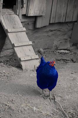 Barnyard Digital Art - Blue Chicken by Bill Cannon