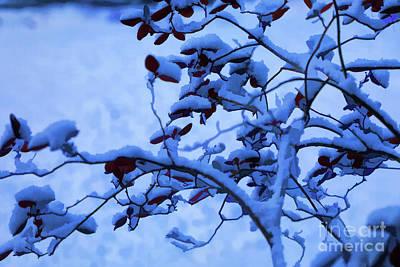 Photograph - Blue Christmas by Rick Bragan