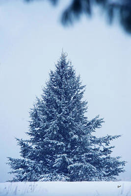 Maine Landscapes Photograph - Blue Christmas Tree by Alana Ranney
