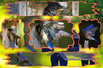 Photograph - Blue Collage 2 by Angel Cher