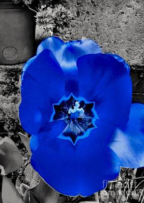 Photograph - Blue Colour Splash Tulip by Joan-Violet Stretch