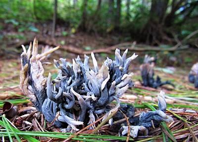 Photograph - Blue Coral Fungi by Joshua Bales
