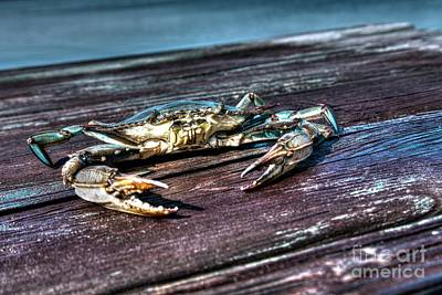 Photograph - Blue Crab - Above View by Tommy Patterson