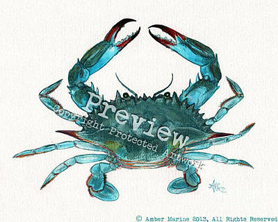 Pincher Drawing - Blue Crab by Amber Marine
