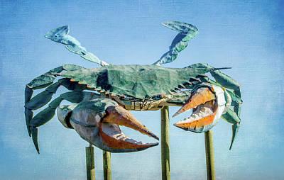 Photograph - Blue Crab by Debra Martz