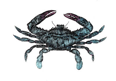 Blue Crab Drawing - Blue Crab Etching by Ed Einboden