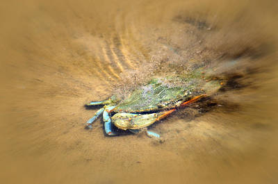 Photograph - Blue Crab Hiding In The Sand by Debra Martz