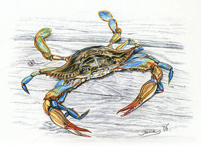 Blue Crab Print by Jana Goode