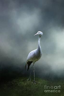 Photograph - Paradise Crane by Eva Lechner