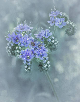 Photograph - Blue Curls by David and Carol Kelly