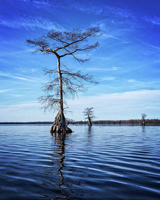 Photograph - Blue Cypress by Alan Raasch