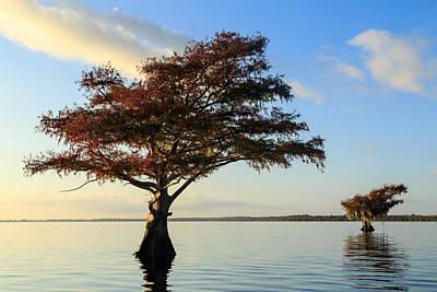 Florida Photograph - Blue Cypress Lake Fall Color by Stefan Mazzola