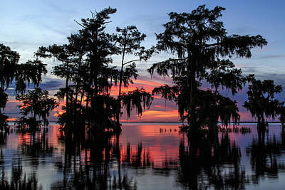 Photograph - Blue Cypress Lake Twilight by Stefan Mazzola