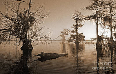 Photograph - Blue Cypress by Richard Nickson
