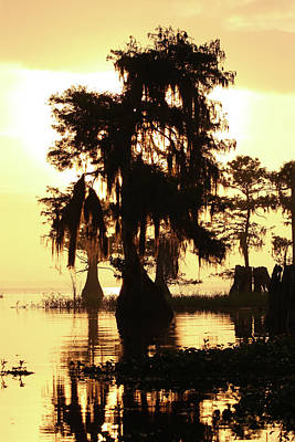 Photograph - Blue Cypress Yellow Light by Paul Rebmann
