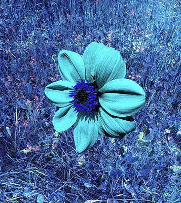 Blue Dahlia Abstract Art Print