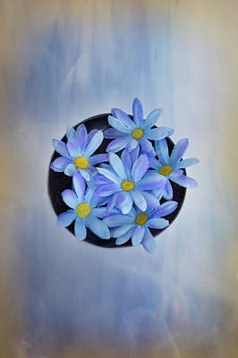 Photograph - Blue Daisies by Elvira Pinkhas