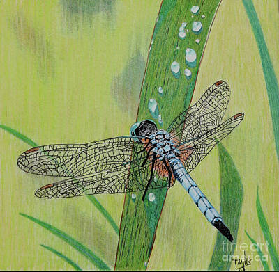 Drawing - Blue Dasher by Terri Mills