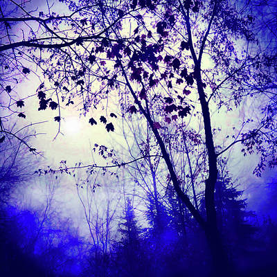 Photograph - Blue Dawn by Gina Signore