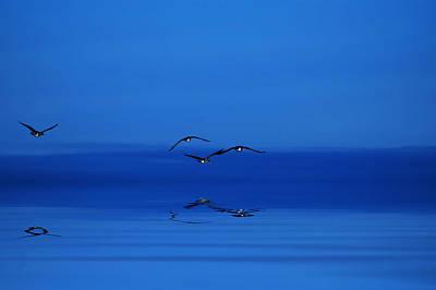 Digital Art - Blue Dawn by JGracey Stinson