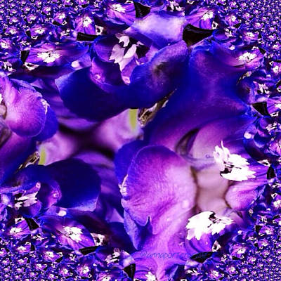 Fractal Wall Art - Photograph - Blue Delphinium Abstracted by Anna Porter
