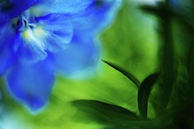 Blue Delphinium Art Print by Bonnie Bruno