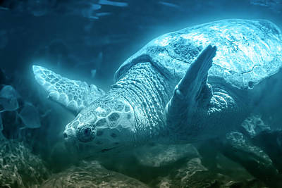 Reptiles Royalty-Free and Rights-Managed Images - Blue Depths Sea Turtle by Betsy Knapp