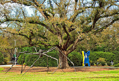 Oak Photograph - Blue Dog And The Spider by Steve Harrington