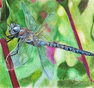 Drawing - Blue Dragonfly by Christian Conner