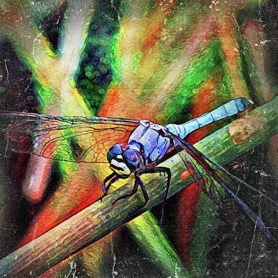 Painting - Blue Dragonfly by David MCKINNEY